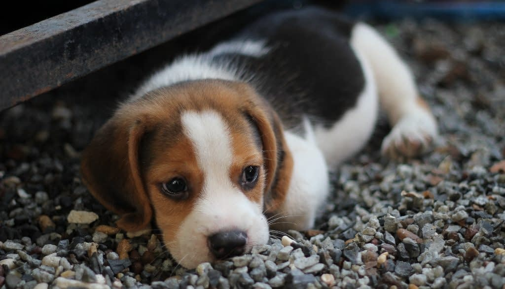 puppy that is hiding